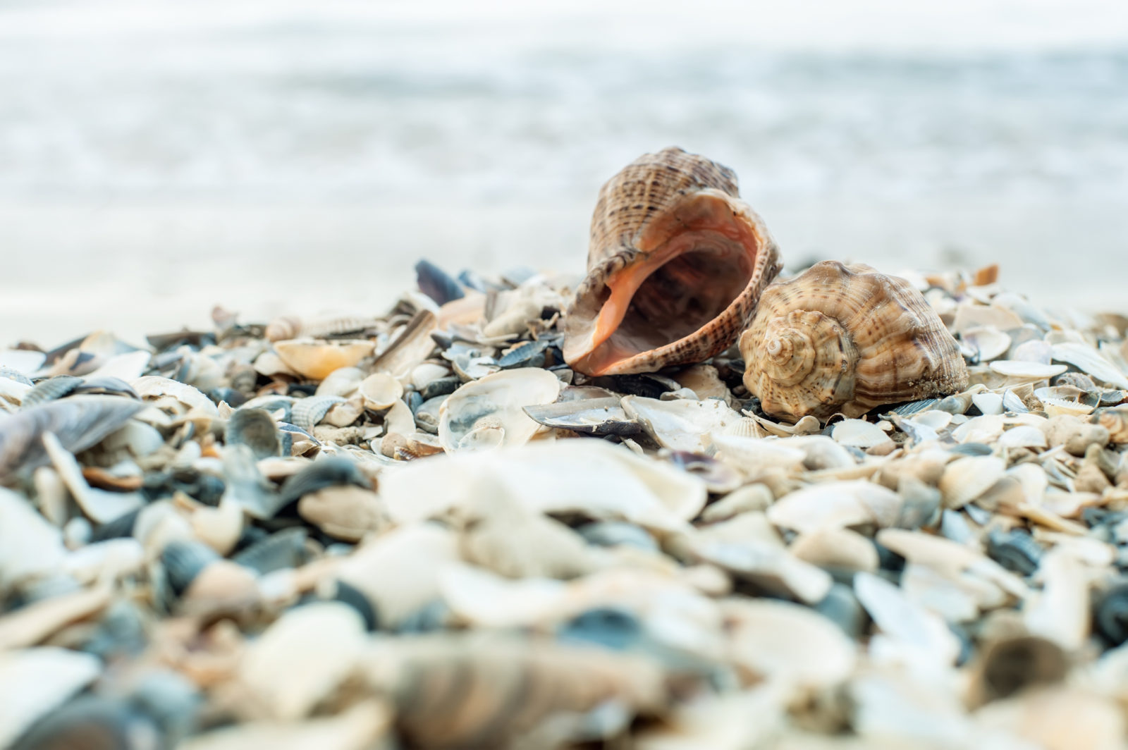 Best Beaches For Seashell Collecting